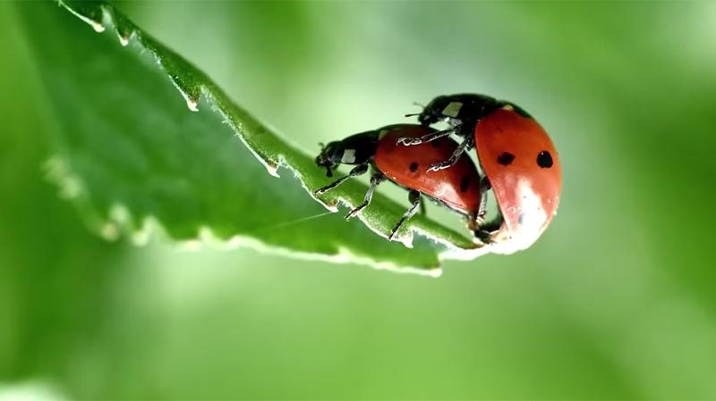 WWF Et Les Animaux Dragueurs : Cours de Séduction Naturel !