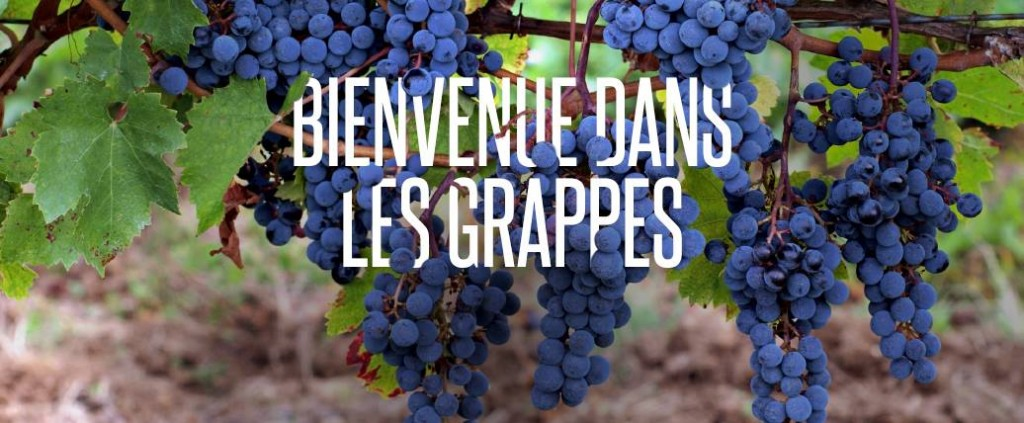 Les-grappes-loic-tanguy-vin