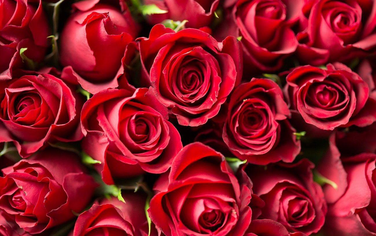 Offrir des fleurs pour s'excuser