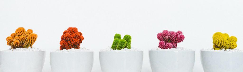 cadeau-gênant-cactus