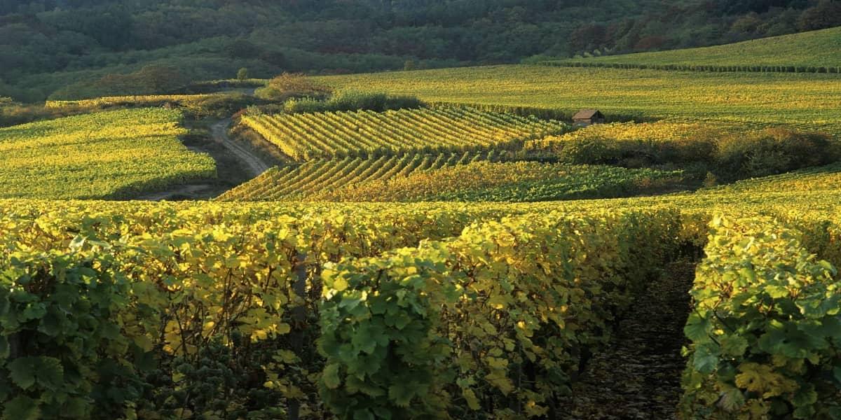 week-end-amoureux-strasbourg-route-des-vins